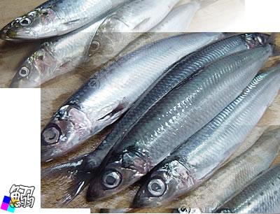 未だ大衆魚の域にあるイワシ